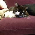 其實這是卡拉躺在我旁邊~