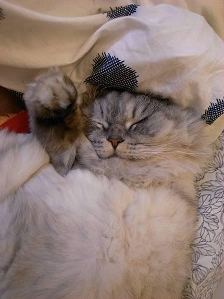 灰皮睡的好好笑~
