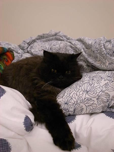 他也很愛躺棉被ㄛ~我回家都會數洞~