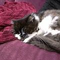 卡拉比較喜歡沙發躺~