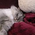 灰皮睡覺的樣子好可愛~