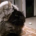 好吧~貓也是亂倫的勒~~