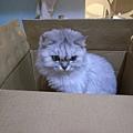 貓的慣性...喜歡躲在狹小空間勒~