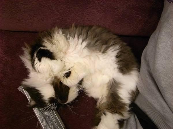 卡拉超愛睡成這樣..整個亂扭~