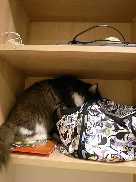卡拉在幹麻偷看我包包~