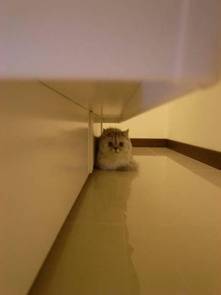 我們剪貓指甲,卡妞躲這邊~