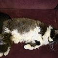 卡拉很明顯是攤著肚子在休息吧~