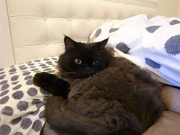 這是躺爺爺枕頭的黑皮~