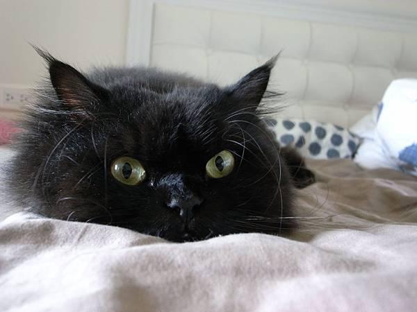 我很愛黑皮這樣很無辜的眼~