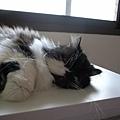 懶惰的貓...