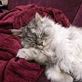 沒小黃墊用懶人毯呀~