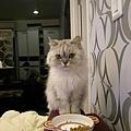 又不吃飯了~卡妞~