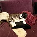 整個堆滿抱枕的沙發~卡拉躺在上面~