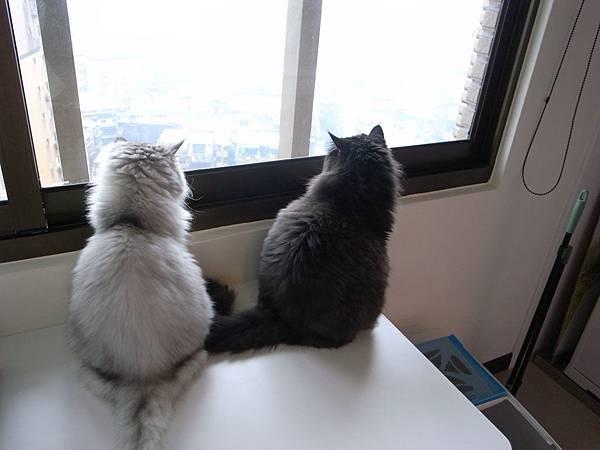 兩隻看外面~