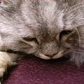 灰皮睡的好可愛呀~