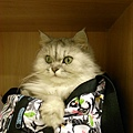 卡妞完全佔領我的包包了~