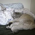 睡的好舒服呀~灰皮~
