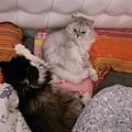 卡妞躺好卡拉只好乖乖躺旁邊~
