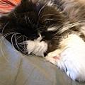 卡拉則是會躺在我們兩個人晚上睡覺的位置