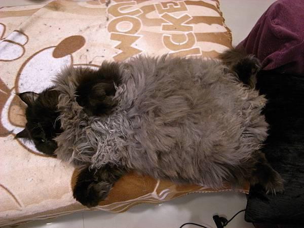 看他這樣睡我都好開心~