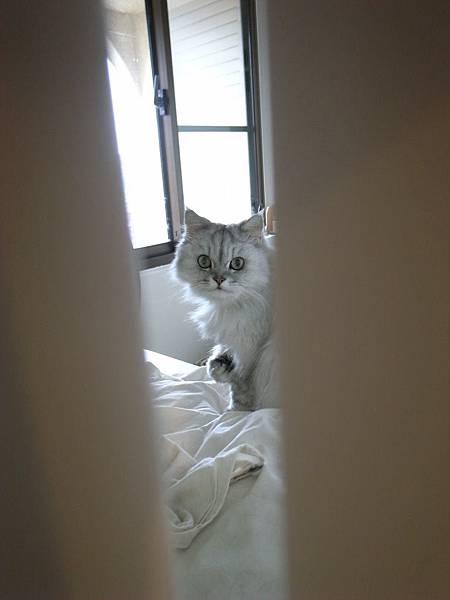門縫中偷看舔手的卡妞..但我被她發現了~