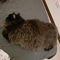 這是黑皮胖胖的代表作..請注意他是扭著身體的~但不明顯