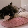 也喜歡粉紅墊的卡拉~