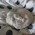 灰皮也遮臉睡著