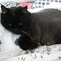 黑黑把棉被當枕頭~