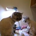 兩隻貓一胖一瘦