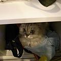 躲在櫃子的卡妞