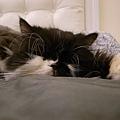 卡拉也一起躺~