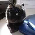 有太陽貓咪都很開心勒~