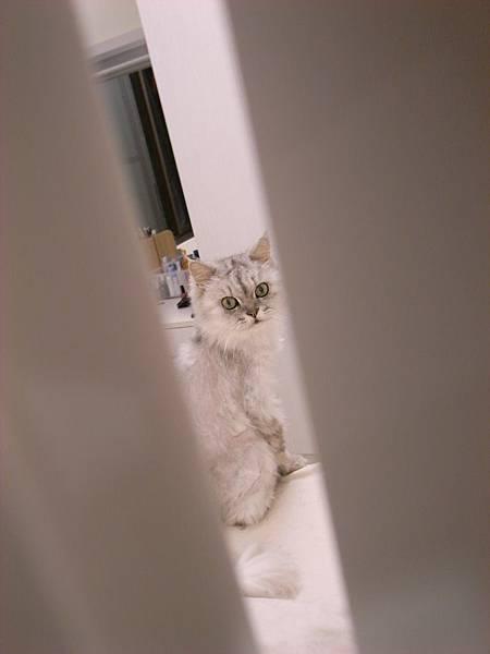 我跑到門縫拍他~被發現~