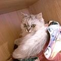 有必要把我包包挖開躺進去嗎~