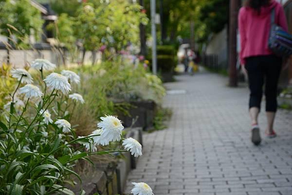 路邊小花都可愛~