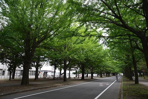 銀杏道..秋天一定很美~