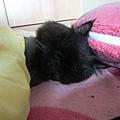 他常睡側躺好可愛~