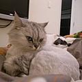 妹都躺棉被上~
