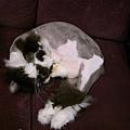 看到卡拉睡成這樣