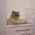 灰皮真的很愛這邊~連續好幾天都躺在這睡覺