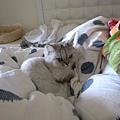 妹還是喜歡躺棉被堆呀~
