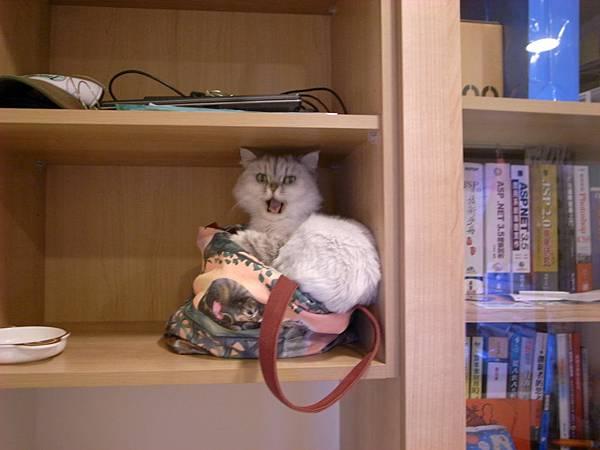 老大的伴讀貓..但是她坐在我包包上~