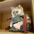 老大準備考試的時候..貓又進去伴讀了