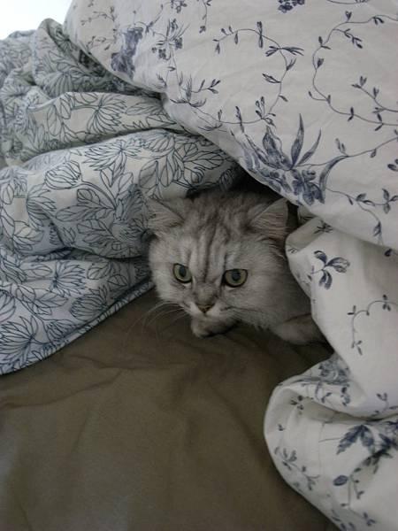 好冷~妹妹就躲進棉被堆中了~