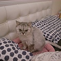 卡妞睡覺的床~我都會摸摸她一起入睡