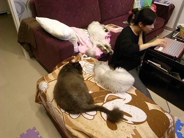 是不是我好幸福~三貓陪我呀~