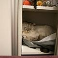 灰皮會再這裡面睡~~