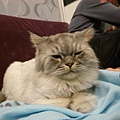 灰皮就很愛佔領沙發~睡的好呆