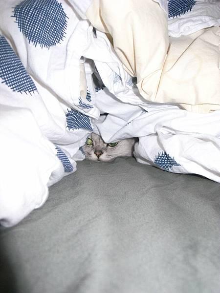 中午我回家~卡妞在棉被堆中跑出來~吃飯後又跑回去~